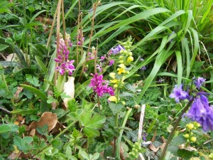 early purple orchid, yellow archangel