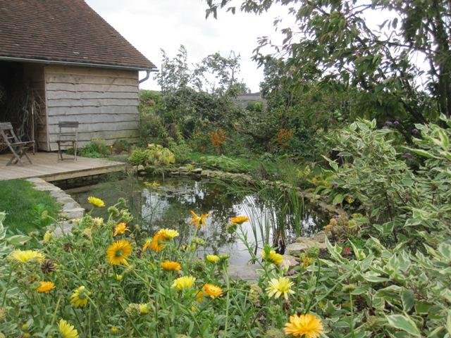 Wildlife pond angela morley garden design for Wildlife pond design uk