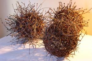 oak, ash, beech balls