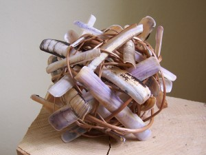 willow & razor shells