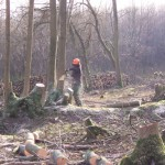 me coppicing