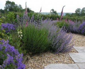 Garden Design Easy Maintenance gardening for wildlife « angela morley garden design